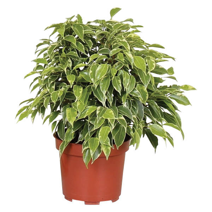 rastline za svež zrak 7